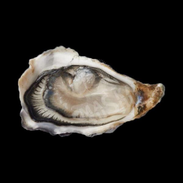 ustrica-fin-oleron0